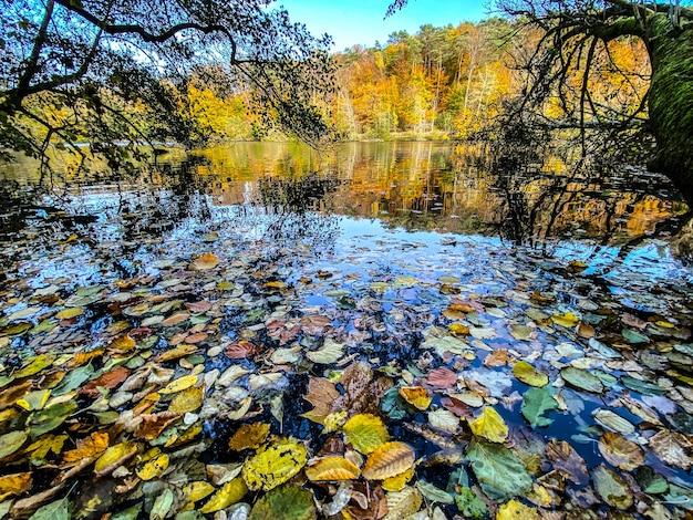 Folhas mortas caídas flutuando na superfície da água