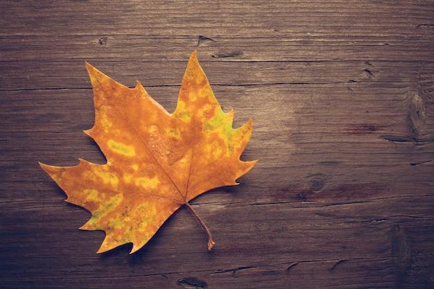 Folhas mortas no fundo do banco de madeira
