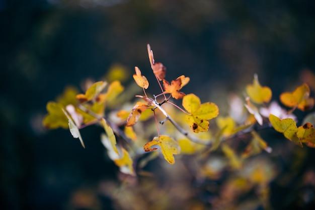 Folhas mudando de cor no outono
