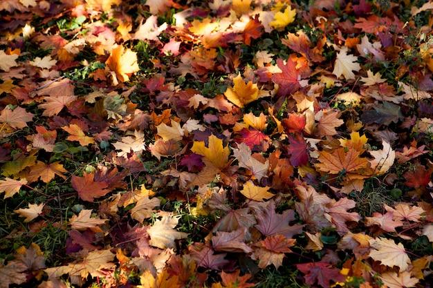 Folhas multicoloridas no outono no parque