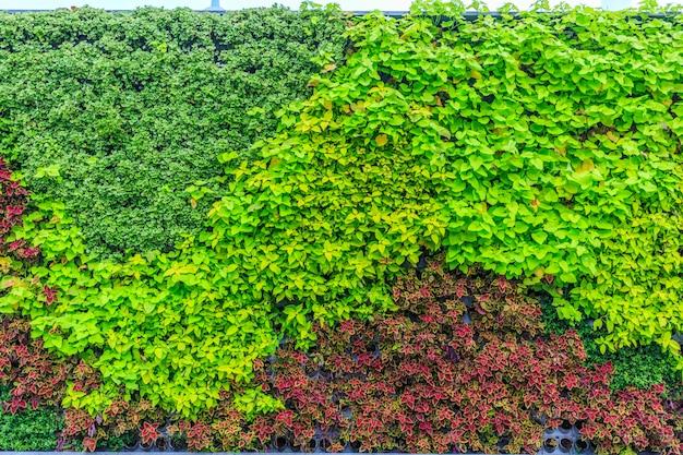 Folhas multicoloridas