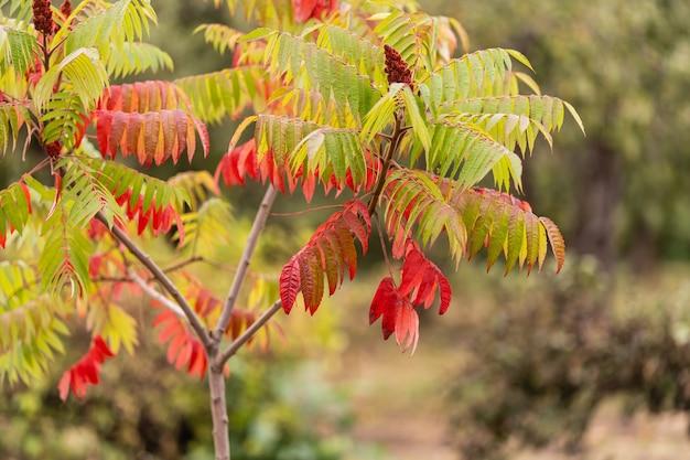 Folhas na floresta de outono com tempo ensolarado