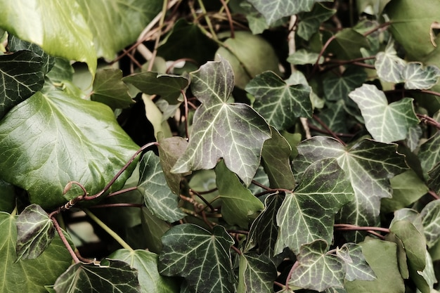 Folhas na natureza