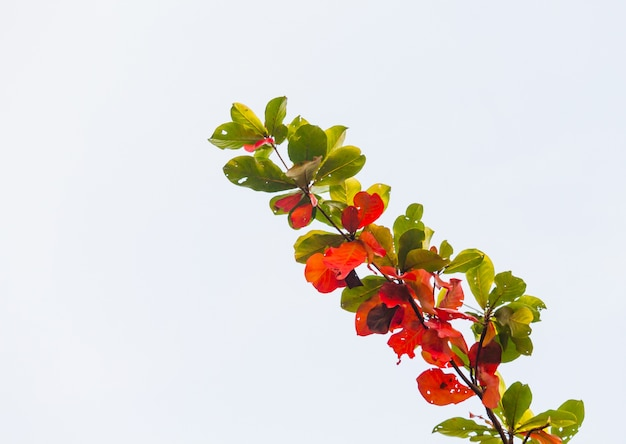 Folhas na temporada de outono