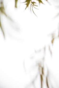 Folhas naturais em pano de fundo branco