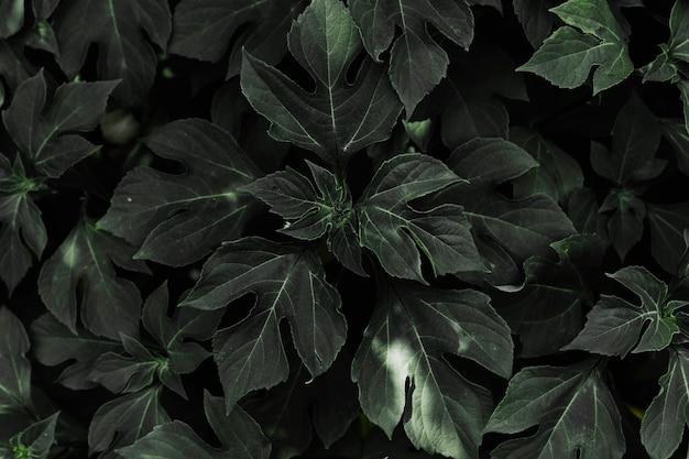 Folhas naturais escuras