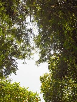 Folhas no fundo do céu, fotos com luz de fundo