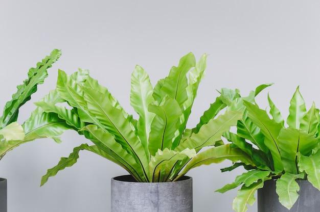 Folhas onduladas verdes no vaso para a decoração da casa