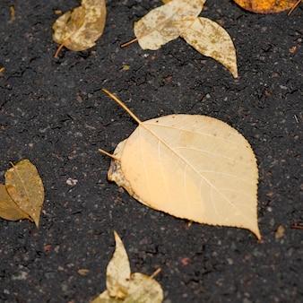 Folhas outono, ligado, a, pavimento, em, parque central, manhattan, cidade nova iorque, eua