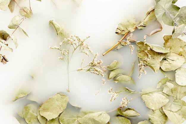Folhas pálidas de vista superior em água branca