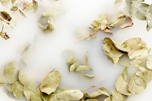 Folhas pálidas em água branca