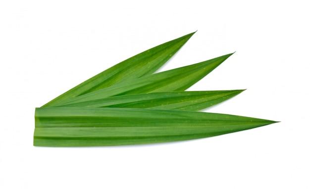 Folhas pandan verdes frescas