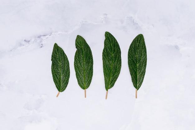 Folhas paralelas no fundo de mármore
