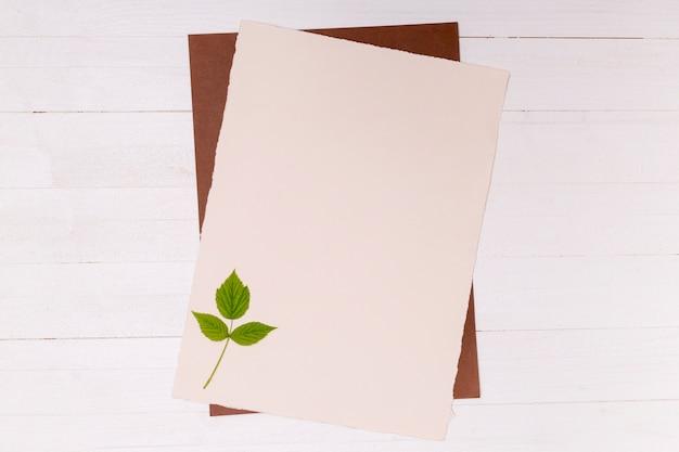 Folhas pequenas de bétula prata na superfície do espaço de cópia