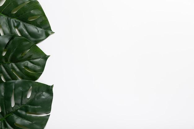 Folhas realistas da vista superior do espaço da cópia