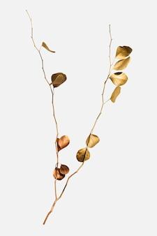 Folhas redondas de eucalipto pintadas em dourado em um fundo esbranquiçado