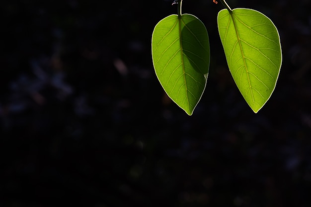 Folhas refletindo a luz natural do sol durante o dia em um fundo escuro
