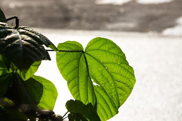 Folhas refletindo a luz natural do sol durante o dia