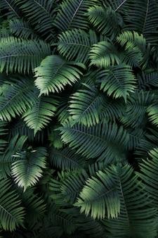 Folhas samambaia tropical vista superior natureza