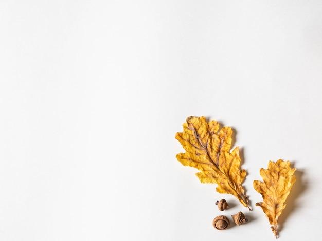 Folhas secas amarelas e bolotas do carvalho no fundo branco. copie o espaço