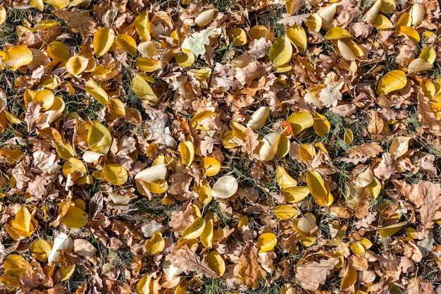 Folhas secas caídas em uma clareira na floresta. fundo natural de folhagem multicolorida