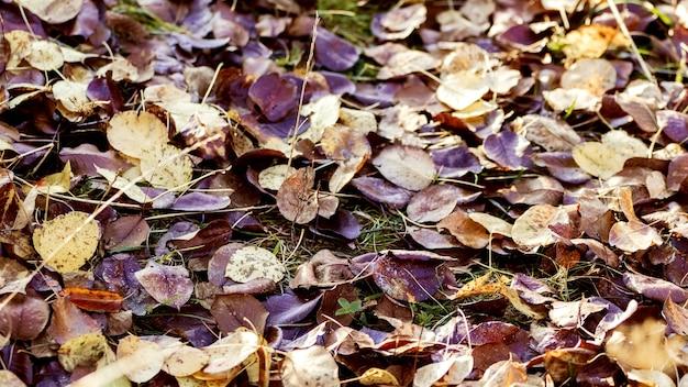Folhas secas caídas no chão da floresta