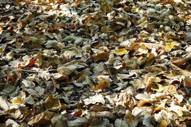 Folhas secas caídas no térreo e luz do dia no inverno