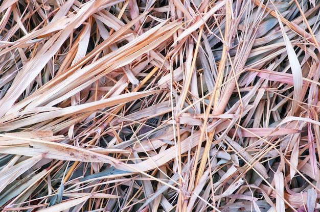Folhas secas de bambu. o bambu é uma planta encontrada na selva