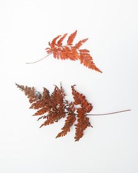 Folhas secas de composição floral de outono em fundo branco conceito de outono outono vista plana de cima