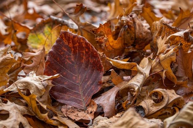 Folhas secas de faia e bordo no chão no parque outono