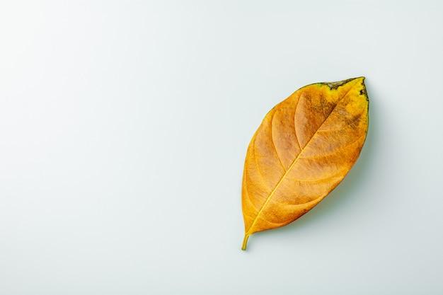 Folhas secas de marrom no fundo branco.