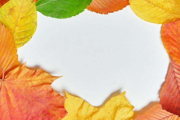 Folhas secas de outono em madeira branca