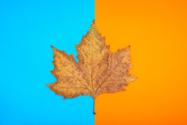 Folhas secas de outono em um fundo azul e laranja