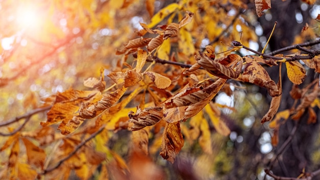 Folhas secas de outono na floresta em uma árvore em um dia ensolarado