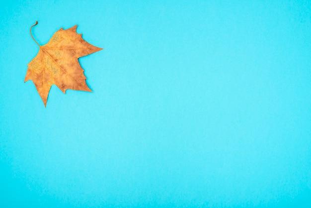 Folhas secas de outono sobre um fundo azul.