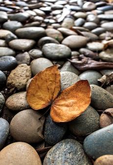 Folhas secas do close up no assoalho de pedra com macio-foco no fundo e sobre a luz