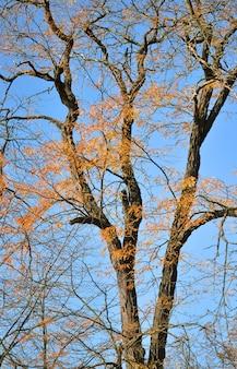 Folhas secas e amarelas em um tronco de árvore com preto contra o céu azul sem nuvens