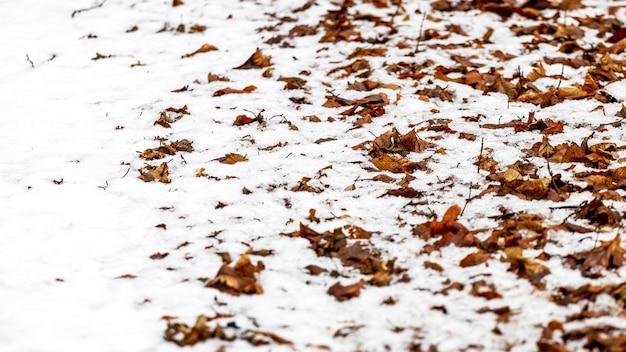 Folhas secas e cobertas de neve na floresta no chão, fundo de inverno