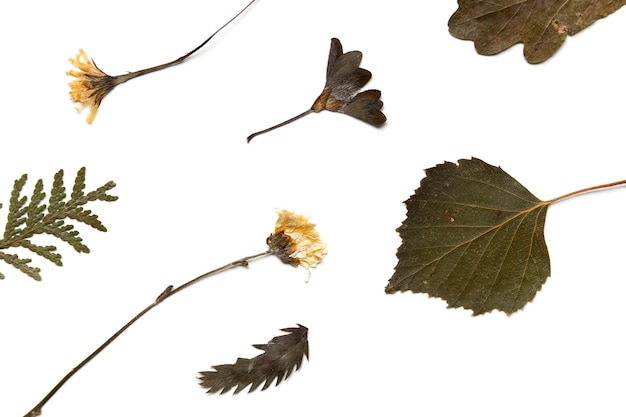 Folhas secas e flores de outras plantas. herbário em um fundo branco, vista superior de plantas secas e planas