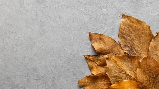 Folhas secas e planas com espaço de cópia