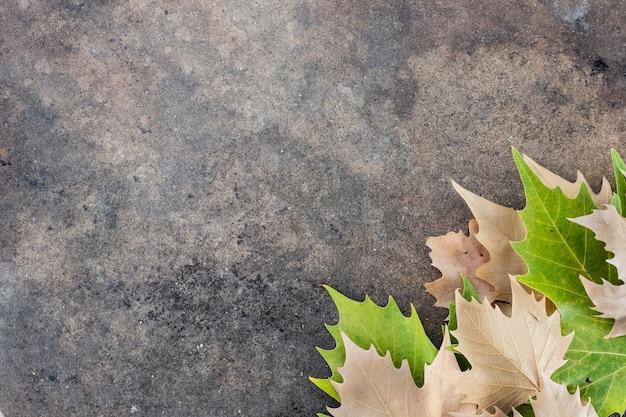 Folhas secas no canto inferior direito de uma mesa