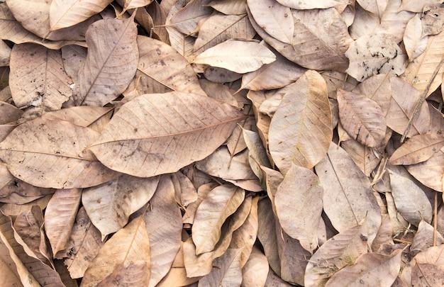 Folhas secas no chão outono fundo