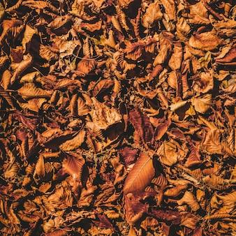 Folhas secas no fundo do solo