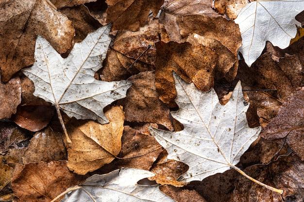 Folhas secas planas