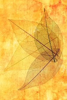 Folhas transparentes com laranja e amarelo
