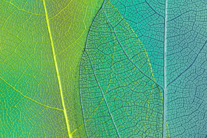 Folhas transparentes verdes e azuis