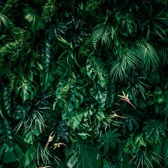 Folhas tropicais como natureza e meio ambiente jardim botânico e planta floral de fundo gr ...