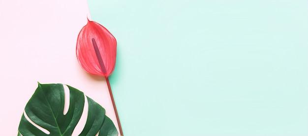 Folhas tropicais e flor vermelha de antúrio.