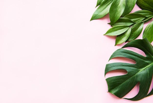Folhas tropicais e folha de monstera