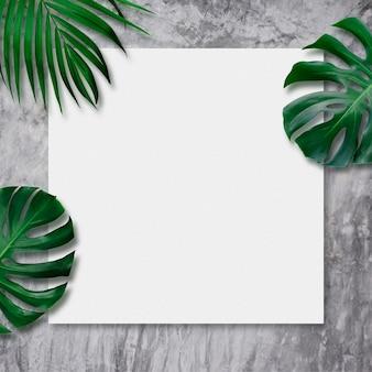 Folhas tropicais e tela em branco sobre fundo de cimento
